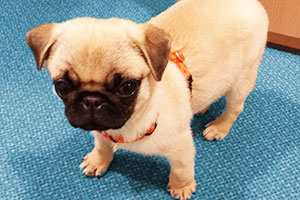Reisen mit Hund: Hund im a&o Hoste